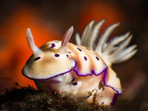 sea slug on ginamaan