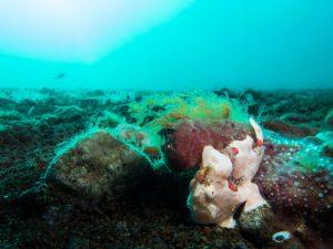 Unity point, Dauin Dive Site - Bongo Bongo Divers